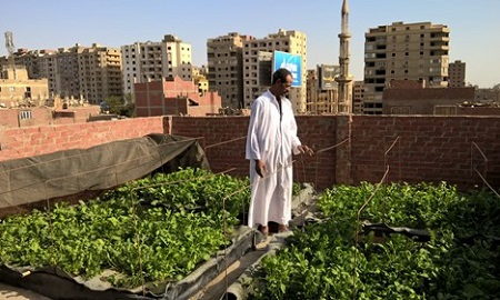 Cooling Cairo: One Rooftop Garden at a Time