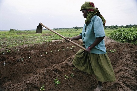 World Bank's Attack on Small Farmers