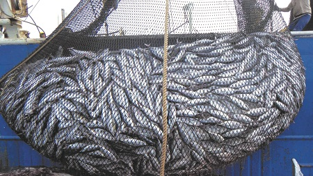 EU-Morocco Fishery Accord Violates Law—Again