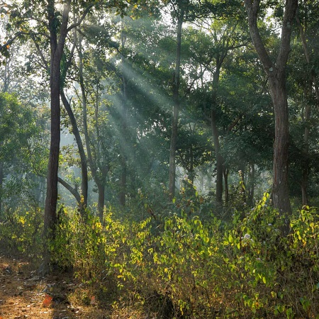 India: Turning 170K-ha Forest to Coal